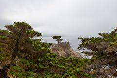 Απομονωμένο κυπαρίσσι σε Monterey Στοκ Εικόνες