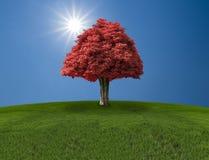 Απομονωμένο κόκκινο δέντρο στον τομέα με το μπλε και τον ήλιο Στοκ φωτογραφία με δικαίωμα ελεύθερης χρήσης