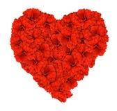 απομονωμένο κόκκινο αγάπης καρδιών λουλουδιών hibsicus Στοκ Φωτογραφία