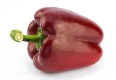 απομονωμένο κόκκινο πιπε&r Στοκ Φωτογραφία