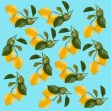 απομονωμένο λεμόνι Ολόκληρο φρέσκο λεμόνι δύο που απομονώνεται στο άσπρο backgrou στοκ φωτογραφίες