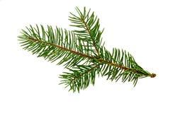 απομονωμένο λευκό δέντρω&nu Κλάδος πεύκων Έλατο Χριστουγέννων στοκ εικόνα με δικαίωμα ελεύθερης χρήσης