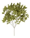 απομονωμένο λευκό δέντρω&nu Στοκ φωτογραφίες με δικαίωμα ελεύθερης χρήσης
