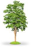 απομονωμένο λευκό δέντρω&nu στοκ εικόνες με δικαίωμα ελεύθερης χρήσης