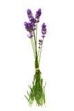 απομονωμένο λουλούδια la στοκ φωτογραφίες με δικαίωμα ελεύθερης χρήσης