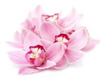 απομονωμένο λουλούδια orchid ροζ Στοκ Φωτογραφίες