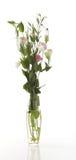 απομονωμένο λουλούδια va στοκ εικόνες με δικαίωμα ελεύθερης χρήσης