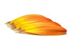 απομονωμένο λουλούδι μ&alph Στοκ εικόνες με δικαίωμα ελεύθερης χρήσης