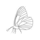 Απομονωμένο μαύρο crataegi aporia πεταλούδων περιλήψεων με τη γραμμή στα φτερά στο άσπρο υπόβαθρο Πλάγια όψη Στοκ Φωτογραφία