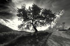 Απομονωμένο μονοχρωματικό δέντρο Στοκ Εικόνες