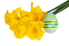 Απομονωμένο μπλε αυγό Πάσχας με τα πράσινα λωρίδες που κλίνονται σε κίτρινο Daffodils Στοκ εικόνα με δικαίωμα ελεύθερης χρήσης