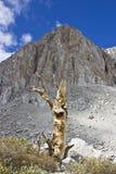 Απομονωμένο νεκρό δέντρο στοκ φωτογραφίες