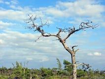 Απομονωμένο ξηρό δέντρο στοκ φωτογραφίες