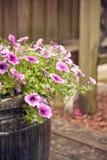 απομονωμένο λουλούδια λευκό δοχείων Στοκ Εικόνες