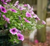 απομονωμένο λουλούδια λευκό δοχείων Στοκ εικόνα με δικαίωμα ελεύθερης χρήσης