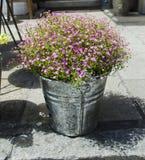 απομονωμένο λουλούδια λευκό δοχείων Στοκ φωτογραφίες με δικαίωμα ελεύθερης χρήσης
