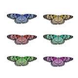 Απομονωμένο πεταλούδα κολάζ Στοκ Εικόνες