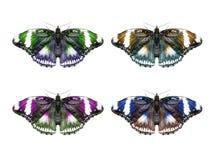 Απομονωμένο πεταλούδα κολάζ Στοκ φωτογραφία με δικαίωμα ελεύθερης χρήσης