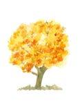 Απομονωμένο πορτοκαλί δέντρο φθινοπώρου, χρώμα watercolor φύσης Στοκ Φωτογραφία