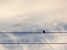 Απομονωμένο πουλί στα καλώδια στα σύννεφα Στοκ εικόνα με δικαίωμα ελεύθερης χρήσης