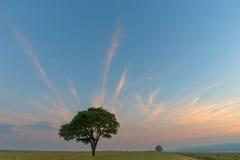 Απομονωμένο πράσινο δέντρο με τα streaky σύννεφα Στοκ φωτογραφίες με δικαίωμα ελεύθερης χρήσης