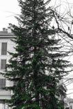 Απομονωμένο πράσινο χριστουγεννιάτικο δέντρο στην πόλη τετραγωνικό υπαίθρια Μιλάνο Ital Στοκ εικόνα με δικαίωμα ελεύθερης χρήσης