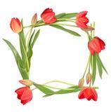 Απομονωμένο πλαίσιο κύκλων από τα λουλούδια τουλιπών Στοκ Εικόνες