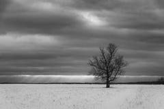 Απομονωμένο σκοτεινό δέντρο Στοκ Εικόνα