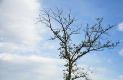 Απομονωμένο υπόβαθρο μπλε ουρανού φθινοπώρου δέντρο στοκ εικόνες
