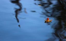 Απομονωμένο φύλλο Στοκ φωτογραφία με δικαίωμα ελεύθερης χρήσης