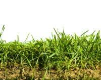 απομονωμένο χλόη χώμα στοκ φωτογραφία με δικαίωμα ελεύθερης χρήσης