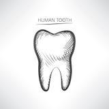 απομονωμένο δόντι Συρμένο εικονίδιο σκίτσων δοντιών χέρι απεικόνιση αποθεμάτων