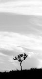 απομονωμένο δέντρο Στοκ Φωτογραφίες
