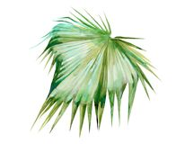 Απομονωμένο deocration φύλλων πράσινων φυτών watercolor απεικόνιση αποθεμάτων