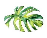 Απομονωμένο deocration φύλλων πράσινων φυτών watercolor διανυσματική απεικόνιση