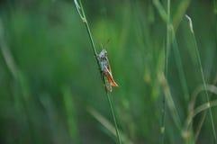 Απομονωμένο grasshopper δροσερή φωτογραφία Σήμερα είναι η καλύτερη φωτογραφία που είχα στοκ φωτογραφίες