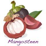 απομονωμένο mangosteen διάνυσμα Στοκ εικόνες με δικαίωμα ελεύθερης χρήσης