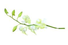 απομονωμένο orchid λευκό Στοκ εικόνες με δικαίωμα ελεύθερης χρήσης