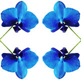 απομονωμένο orchid Στοκ Εικόνες