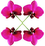 απομονωμένο orchid Στοκ φωτογραφίες με δικαίωμα ελεύθερης χρήσης