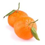 απομονωμένο tangerines φύλλων λε&upsi Στοκ Εικόνες