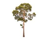 Απομονώστε το δέντρο Στοκ Φωτογραφίες