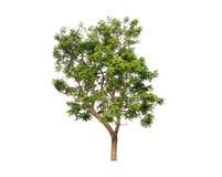 Απομονώστε το δέντρο Στοκ φωτογραφίες με δικαίωμα ελεύθερης χρήσης