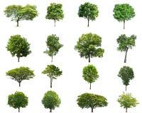 Απομόνωση δέντρων collectoin στο λευκό Στοκ Φωτογραφία