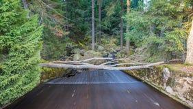 Αποξήρανση στη μικρή λίμνη Arber, Βαυαρία, Γερμανία Στοκ φωτογραφίες με δικαίωμα ελεύθερης χρήσης