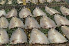 Αποξηραμένα παστά ψάρια στον ήλιο στο καλάθι μπαμπού στοκ φωτογραφία