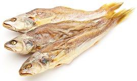 Αποξηραμένα παστά ψάρια Στοκ Φωτογραφία