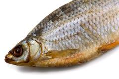 αποξηραμένα ψάρια ένα Στοκ εικόνες με δικαίωμα ελεύθερης χρήσης