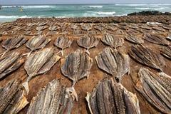 Αποξηραμένα ψάρια και ψάρια στη Σρι Λάνκα Στοκ Φωτογραφία