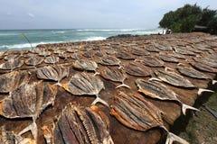 Αποξηραμένα ψάρια και ψάρια στη Σρι Λάνκα Στοκ Εικόνες